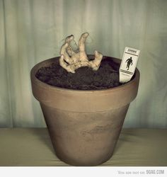 Planting a zombie... Bury a Halloween prop hand and add some creepy black string or cob-webbing and FREE PRINTABLE: http://pinterest.com/pin/124341639685131844/