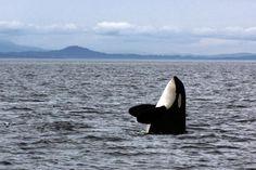 10 Nature and Wildlife Safaris Across Canada