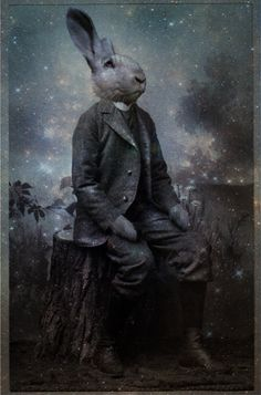mr rabbit by louna lovegood
