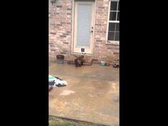 """""""Hey Honey? Did You Put The New Cat Door In?"""" — Cute Overload"""