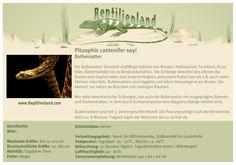 Bullennatter - kompakte Übersicht der Haltungsbedingungen. Unsere Karteikarten können auch zum Beschriften von Terrarien verwendet werden. Ausführliche Haltungsinformationen zur Haltung der Bullennatter gibt es auf www.reptilienland.com
