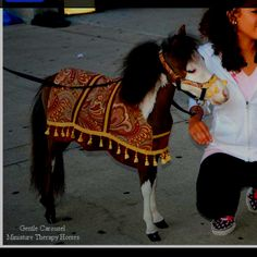 Another one of Gentle Carousel Miniature Horse Therapy tiny minis dressed to work!