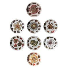 Eight Rare Piero Fornasetti Dishes Decorated with Sea Anemones, Urchins & Shells