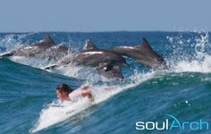 Dolphins in the lineup at Byron Bay, #Australia
