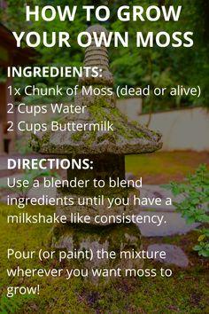 How to Grow Your Own Moss - Modern Design Growing Moss, Growing Plants, Moss Garden, Succulent Planters, Hanging Planters, Succulents Garden, Garden Crafts, Garden Projects, Gardening Tips
