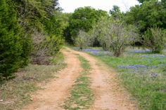 Free Fun in Austin: Indian Grass Prairie Preserve and Sunset Valley Nature Area