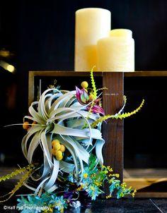 tillandsia cascade bridal bouquet by Black Lotus Design, Sara Eaton