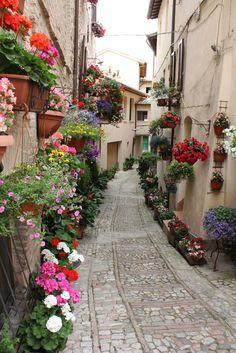 Um verdadeiro jardim na rua de Spello, província de Perugia, região da Umbria, Itália.