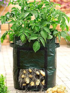 How To Start Organic Gardening Vegetables Organic Gardening, Gardening Tips, Gardening Books, Garden Retaining Wall, Planting Potatoes, Garden Nursery, Garden Quotes, Small Space Gardening, Rooftop Garden