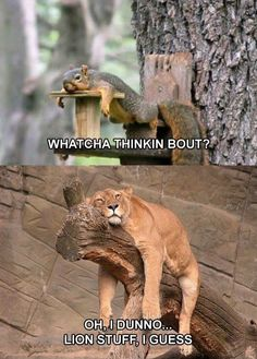 silly. squirrels. lions.