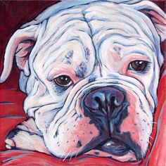 ...White Old English Bulldog Pet Portrait Painting by Bethany