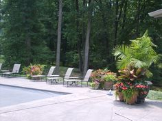 No-Mess Plants for Pools and Patios Blog Image