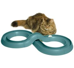 Turbo Track™ Cat Toy at Jackson Galaxy I have an older model of this and my cats love it!