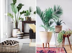Если существуют экзотические домашние растения, которые выигрышно смотрятся почти в любом интерьере, то это, несомненно, комнатные пальмы! Эти растения привносят в нашу холодную долгую зиму особую экзотику дальних стран с их тропической прохладой, ароматом морских побережий и теплом солнечных пустынь. Пальмы — это растения путешественников, мечтателей, романтиков и неисправимых оптимистов. Мы выбрали для вас 5 пальм, … Living Room Scandinavian, Flower Pots, Flowers, Plant Pictures, Deco Design, Go Green, House Rooms, Cozy House, Palm Trees
