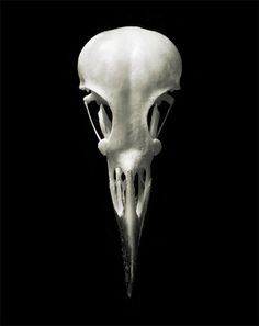 raven skull - Google Search