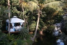 Over the river and through the jungle to The River Cafe we go!