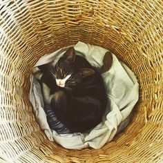 "@michaelord's photo: ""Poppy doesn't care where she sleeps..."""