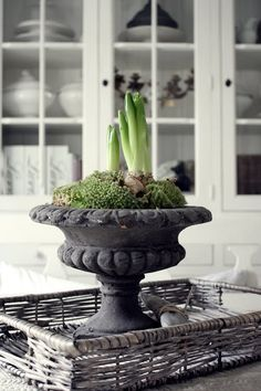 Bulbs in the kitchen... charming spring vignette