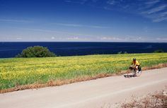 To get more informations about #Veloroute des Bleuets, located in Saguenay-Lac-Saint-Jean, Quebec : http://www.saguenaylacsaintjean.ca/fr/members/129?type=activity&type_id=72 #Saguenay_Lac