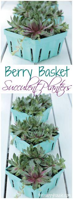 Berry Basket Succulent Planters at thehappyhousie.com