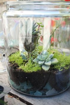 DIY terrarium - love the idea of using a special crystal goblet to hold a plant inside