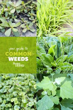 Weed Identification Guide Don't let weeds rob your garden of its beauty. Use our guide to help you identify and control these troublesome pests.