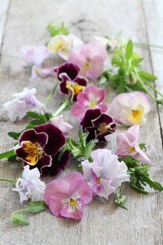 4月レッスンスケジュールのご案内 の画像 美的な押し花 カリグラフィー 花生活