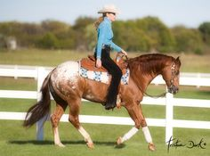 blue valentine quarter horses for sale