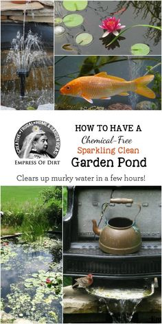 This simple trick is a chemical-free way to clear up murky water in small garden ponds within hours and keep it that way. This simple trick is a chemical-free way to clear up murky water in small garden ponds within hours and keep it that way. Ponds For Small Gardens, Small Ponds, Water Gardens, Outdoor Water Features, Water Features In The Garden, Pond Landscaping, Ponds Backyard, Backyard Ideas, Backyard Waterfalls