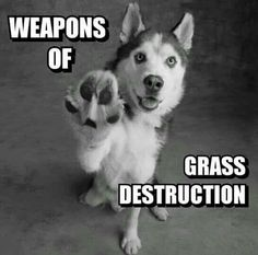 Grass destruction...