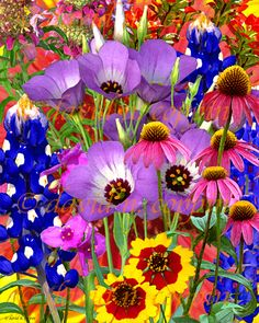 Texas Wildflower Bouquet ... love the flowers in Texas    Repinned #Rx4Nails Made in Texas, USA