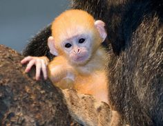 Animals For > Images Of Wild Baby Animals