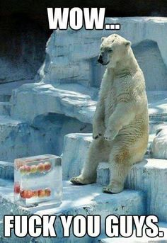 Disappointed polar bear....