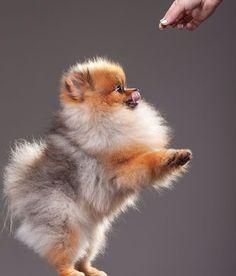 Ahhhh it looks like a fox!!!!