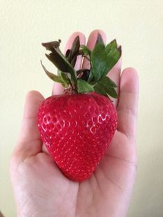 Strawberry on steroids...LOL...