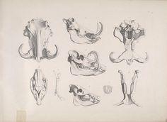 Die vergleichende Osteologieby BioDivLibrary on Flickr.  Bonn :In Commission bei Eduard Weber,1821-1838..biodiversitylibrary.org/page/40170364