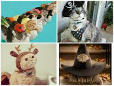 herding cats & burning soup: A to Z / Cat Thursday: Cats in Clothes!