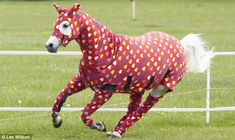 The must have for your horse, a onesie from Shwmae Products as modelled by Bee