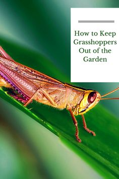 1000 Images About Insecticides Pesticides Naturally On