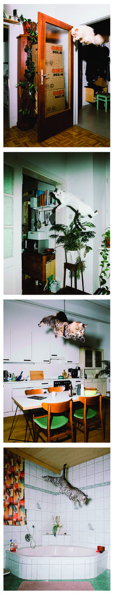 Cats Might Fly - the weird world of Daniel Gebhartde Koekkoek. - His latest project is a comic and surreal 12-image set (and calendar) titled Jumping Cats. As the name suggests, Jumping Cats shows Ume, Elli, Flitzie, Nevio and Fiffy flying, leaping or jumping their way across a selection of rooms in retro European-looking apartments.