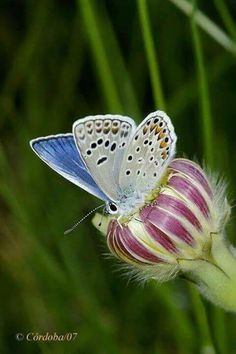 Art Of Nature — Papillon