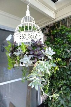 white painted bird cage filled with succulents # filled ., The bird cage is both a house for your chickens and an ornamental tool. You are able to select whatever you need one of the bird cage versions and get a lot more special images. Hanging Succulents, Succulents In Containers, Succulents Garden, Garden Planters, Planting Flowers, Succulent Ideas, Diy Planters, Pergola Garden, Fence Garden