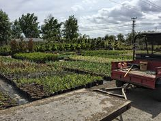 #AlvarezNursery #Panoramic #Plant #Plants #Landscaping #Gardening #Landscape #Flowers #Trees #Flower #Tree #Shrub #Shrubs #Garden #Business #Nursery #California #SanFernandoValley