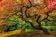 """Photo """"Rainbow_Tree"""" by Abeblair"""