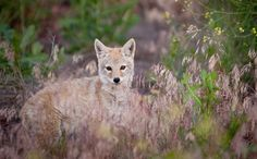 Victory! California Becomes the First State to Ban Wildlife Killing Contests