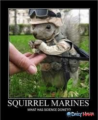 squirrel marines