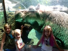 Liam, Stella & Hattie checking out the hippos at San Diego Zoo