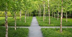 River birch with liriope | Stephen Stimson Associates | Greenwich Garden