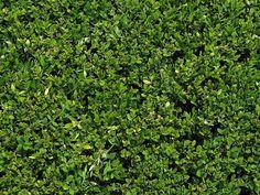 green roof texture - Tìm với Google