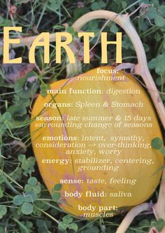 The nourishing Earth element in Chinese Medicine, and it's nourishing functions in the body.       / /   Dandelion Revolution   / /